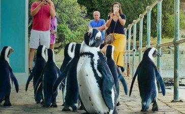 penguin-town-season-2:-everything-we-know